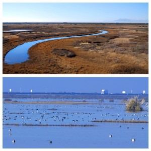 The top photo is of Cullinan Ranch prior to the levee breach. The bottom photo is just three weeks later. (CLICK ON PHOTO TO ENLARGE)